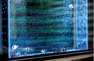 Aquarium and light barriers